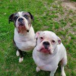 Chewy & Dobbie